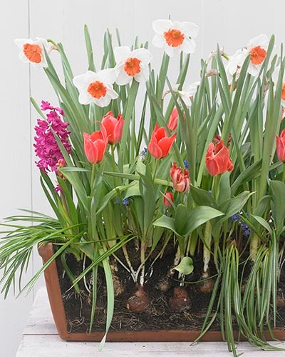blooming planters