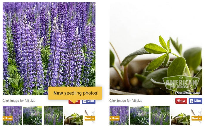 New Added Features - Seedling Photo