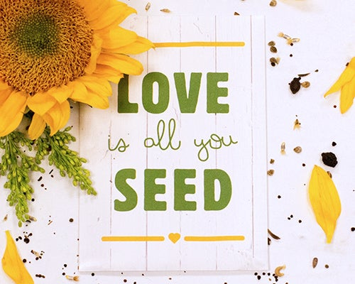 Easy-to-grow wildflowers will bring a smile to all of your friends and family! The Love Is All You Seed packet is a fun favor for bridal showers and wedding events.