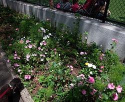 wildflower garden in a park