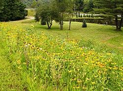 wildflowers along driveway