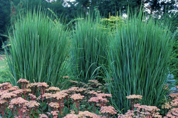 How To Choose The Best Ornamental Grasses