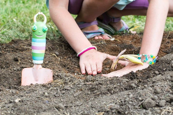 girl planting oriental lily
