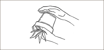 sketch of removing plant from pot