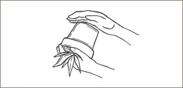 removing plant