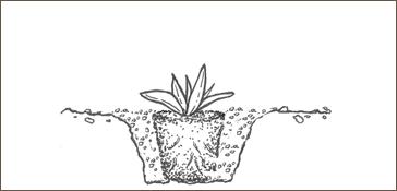 planting sketch