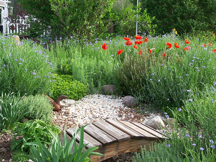 cornflowers and poppies in a garden