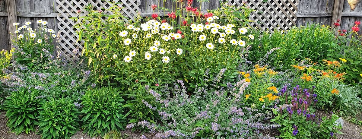 Monarch Magnet Pre Planned Garden