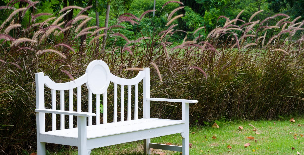 red fountain grass and white bench