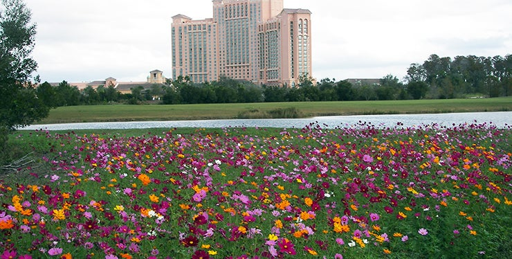 ritz carlton resort and golf course with wildflowers