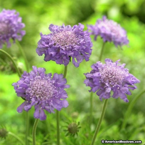 Recommended Perennial Plants For Small Space Gardens