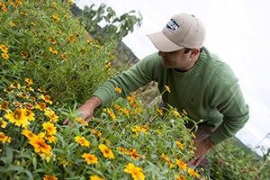 seed man picking wildflowers