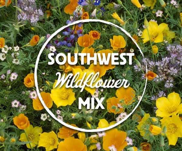 southwest wildflower mix american meadows