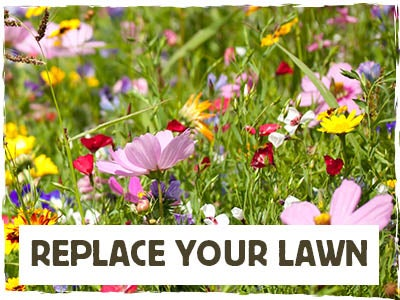 Replace Your Lawn - Spring Into Summer Mix