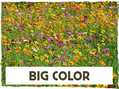 Big Color - Spring Into Summer Mix