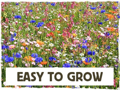 Easy To Grow - Spring Into Summer Mix