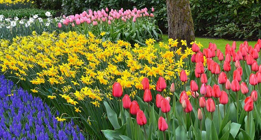 Tulips, and Hyacinths