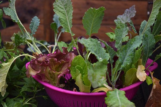 Veggie starts in the garden