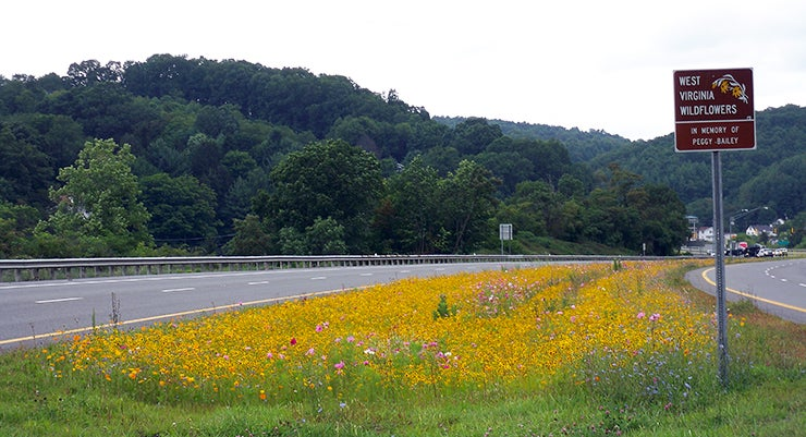 wildflowers next to a highway