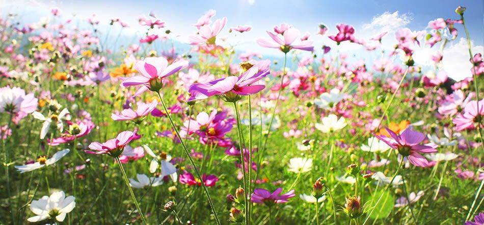 wildflower meadow in sunlight
