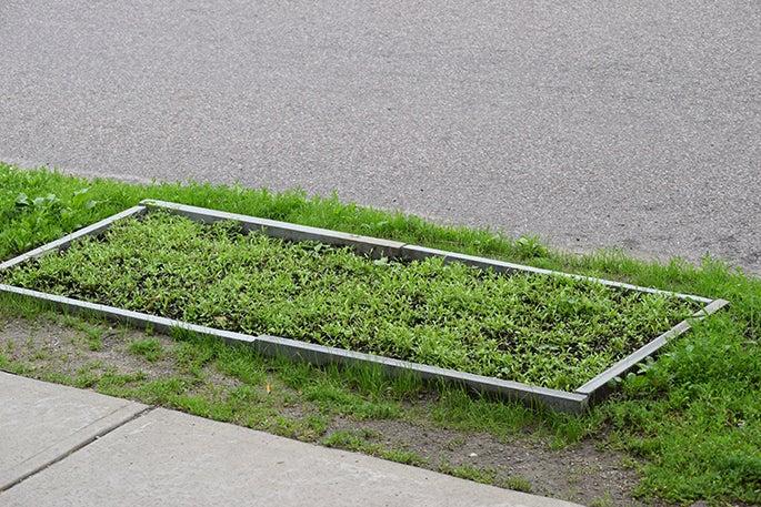 Wildflower Sprouts Street Median