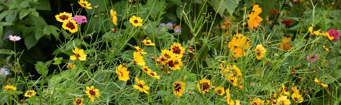 Native Wildflowers: They're beautiful. They're cost-effective. They're pollinator magnets.