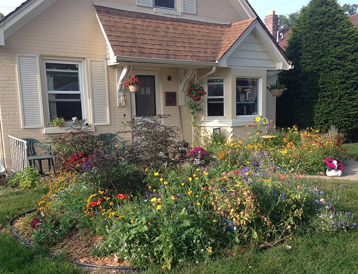 wildflowers in front garden of house