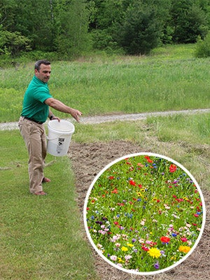 The Seed Man Planting Wildflower Seeds - Wildflower Seed Growing Guide