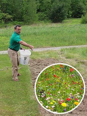 The Seed Man Planting Wildflower Seeds - Wildflower Seed Growing Guide